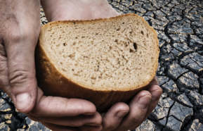 Image for Bread Not Stones