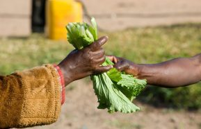 Image for Food Security In Zambia