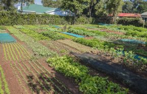 Image for 360 Degrees – Tour a Life Garden and Local Market in Kitale, Kenya
