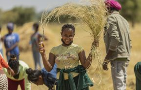 Image for Youth in Ethiopia volunteer to save local farmers' crops during locust crisis